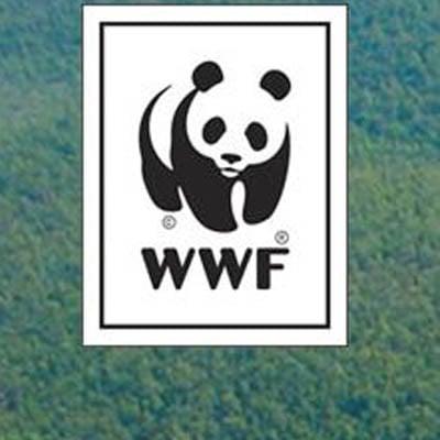Como a WSI construiu um site premiado internacionalmente em tempo recorde
